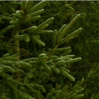 Christmas Tree Getty Image