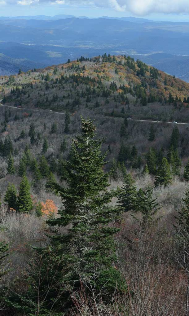 A view of Pisgah National Forest. Photo courtesy of Patrick Sullivan/Times-News