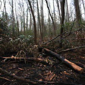 Fire damage near Marion.