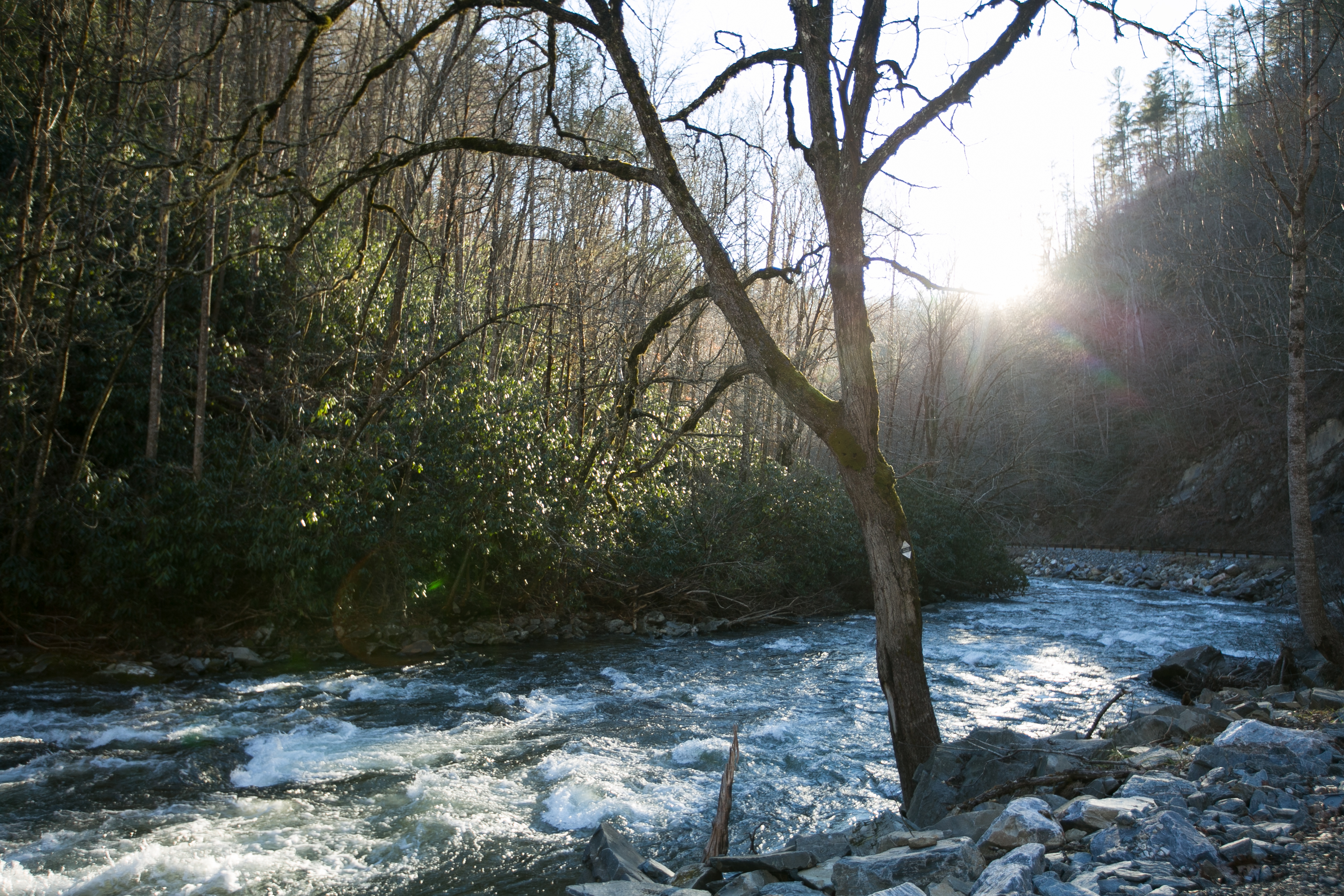 The new national forest management plan for Western North Carolina will govern the Nantahala and Pisgah National Forests.